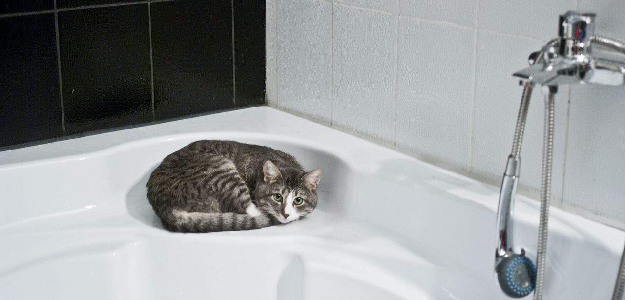 cat in the bath